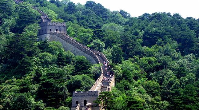 Çin Orman Ürünlerinde Rekor Kırdı