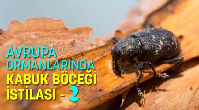 AVRUPA ORMANLARINDA KABUK BÖCEĞİ İSTİLASI - 2