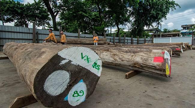 Myanmar'danTİK AĞACINA ONAY !