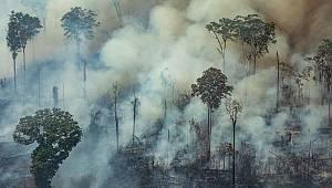 Amazonlar Neden Söndürülmüyor?