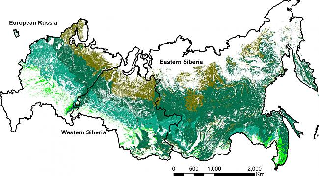 Rusya Ormanlarını Gün Geçtikçe Kaybediyor.