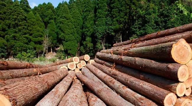 Ukrayna'da orman ürünleri elektronik müzayede ortamında satılmaya başlandı