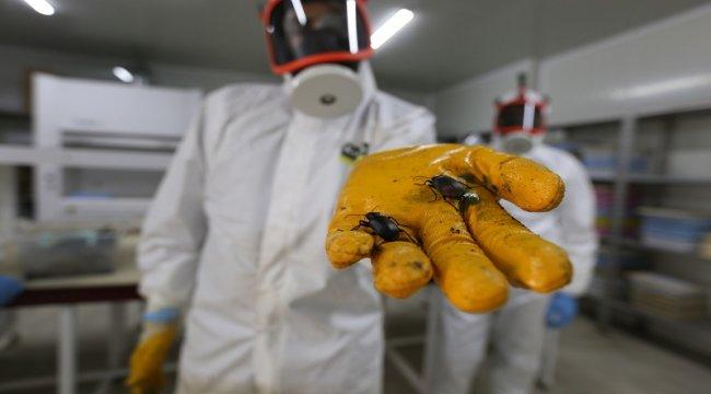 İzmir Biyolojik Mücadele Laboratuvarımızda Üretilen 200 Bin Adet Faydalı Böcek Ormana Bırakıldı