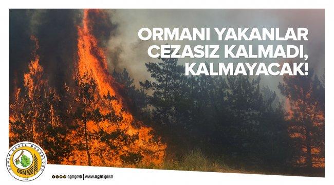 İstanbul Aydos Ormanını Yakan Sanığa 25 Yıl Hapis Cezası Verildi