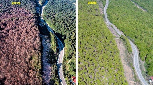 Bursa İnegöl Ormanları Kayın Tırtılı İstilasından Kurtarıldı