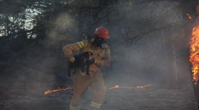 Tüm Orman Yangınları Kontrol Altında